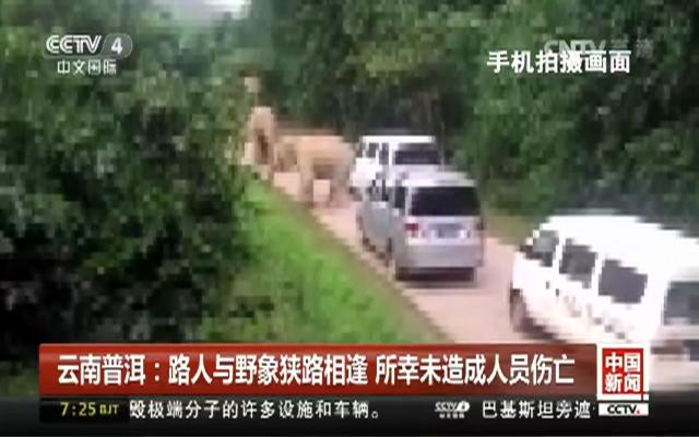 路遇大象50米外安全