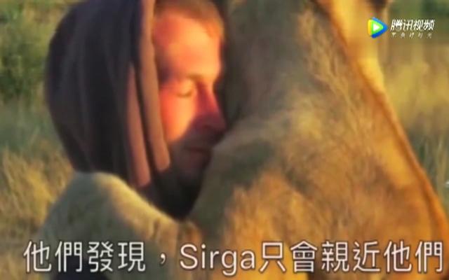 保育员哭着將小狮子野放 多年后狮子还记得救命之恩